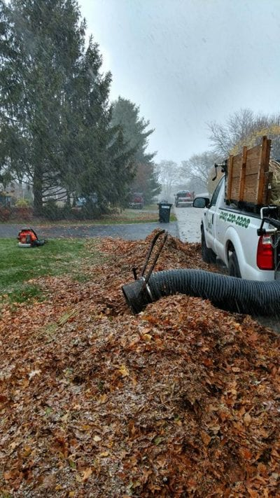 Fall Landscape Cleanup